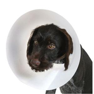 Hunde Halskrause Buster Classic